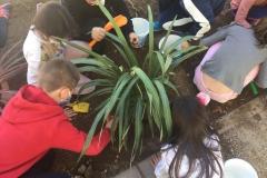 El-huerto-escolar-del-CEIP-Pintor-Camaron-llena-de-color-los-patios-del-colegio-14