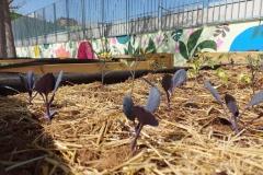 El-huerto-escolar-del-CEIP-Pintor-Camaron-llena-de-color-los-patios-del-colegio-8