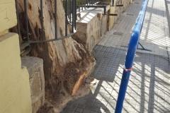 Aceras-niveladas-tras-arreglo-de-arboles-en-la-calle-Obispo-Canubio-de-Segorbe-1