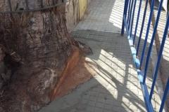Aceras-niveladas-tras-arreglo-de-arboles-en-la-calle-Obispo-Canubio-de-Segorbe-2