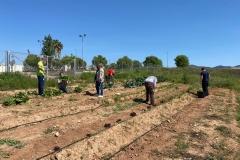 Marisa-Lopez-ha-visitado-el-huerto-donde-los-usuarios-del-CRIS-realizan-el-taller-de-agricultura-2