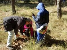 el alcalde en la actividad de plantación de árboles