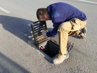 Campaña de desratización en Segorbe
