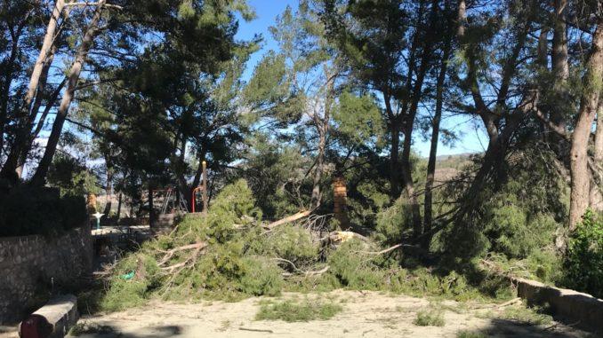 Caída de las ramas de un árbol en Sopeña