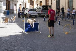Actividad de adiestramiento canino por parte de Vicente Berga - II PerroCross comarcal de Segorbe