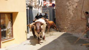 Salida de los Toros en La Entrada de Toros y Caballos (2)