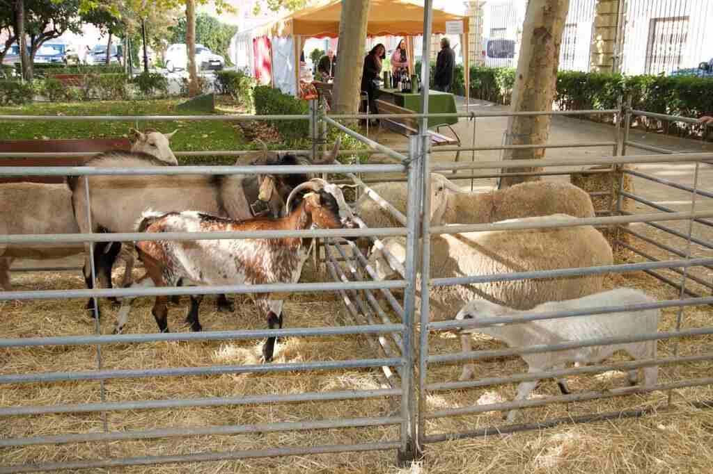 Animales en la II Feria Agroalimentaria