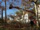 Poda de árboles monumentales en la Glorieta municipal de Segorbe