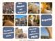 Día Mundial del Turismo en Segorbe